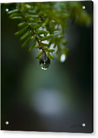 Drop Of Life In The Woods Acrylic Print
