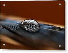 Drop On A Bluejay Feather Acrylic Print by Susan Capuano