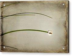 Drop Acrylic Print by Svetlana Sewell