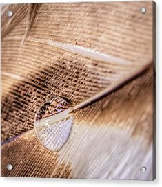 Droplet On A Quill Acrylic Print