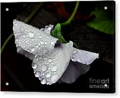 Droplets 2 Acrylic Print