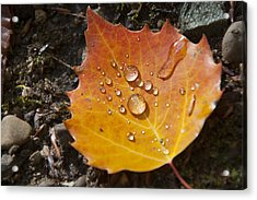 Droplets In Autumn Leaf Acrylic Print