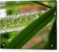 Acrylic Print featuring the photograph Droplets Of Life by Deborah Fay