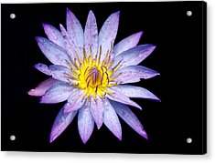 Droplets On A Water Lily. Acrylic Print