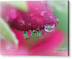 Droplets On The Rose Acrylic Print