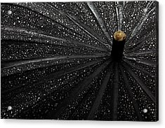 Drops Acrylic Print by Gilbert Claes
