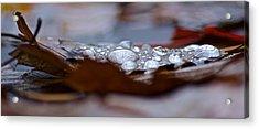Drops Acrylic Print by Jill Laudenslager