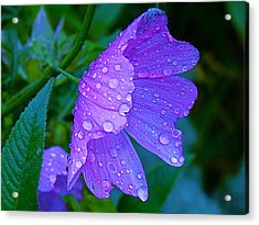 Drops Of Delight Acrylic Print by Rita Mueller