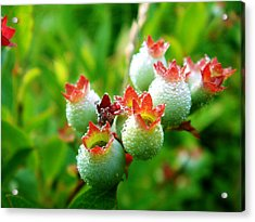 Acrylic Print featuring the photograph Drops Of Hope by Zinvolle Art
