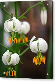 Drops Of Spring Acrylic Print by Ross Henton