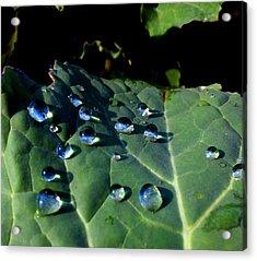 Drops On A Leaf Acrylic Print by Claudia Cefali