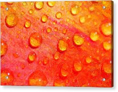 Drops On Flower Petals Acrylic Print by Tommytechno Sweden