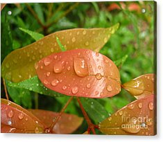 Drops On Leave Acrylic Print by Michelle Meenawong