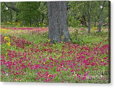 Acrylic Print featuring the photograph Drummonds Phlox And Crown Tickweed Central Texas by Dave Welling