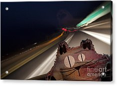 Drunk Driver Acrylic Print by Jeannette Hunt