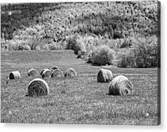 Dry Hay Bales In Maine Farm Field Acrylic Print by Keith Webber Jr