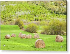 Dry Hay Bales In Spring Farm Field Maine Acrylic Print by Keith Webber Jr