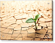 Dry Land Acrylic Print by Boon Mee