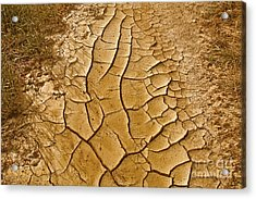 Dry Lands Acrylic Print by Boon Mee