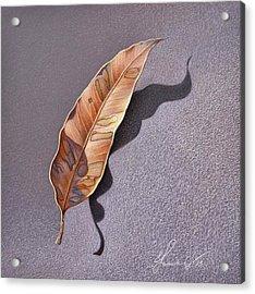 Dry Leaf Acrylic Print by Elena Kolotusha