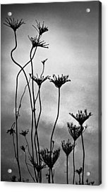 Acrylic Print featuring the photograph Dry Plants by Arkady Kunysz