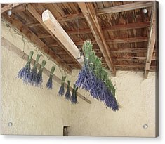 Drying Lavender Acrylic Print by Pema Hou