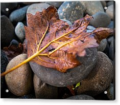 Acrylic Print featuring the photograph Drying Leaf by Mike Lee