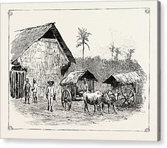 Drying Sheds For Tobacco, Sumatra, Indonesia Acrylic Print