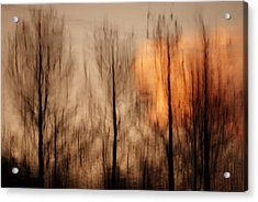 Acrylic Print featuring the photograph Drying Wet by Lorenzo Cassina