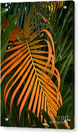 Dryness Acrylic Print by Michelle Meenawong
