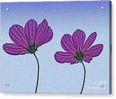 Dual Acrylic Print by Nur Roy