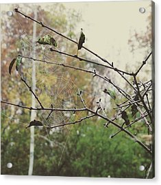 Acrylic Print featuring the photograph Dual Webs by Nikki McInnes