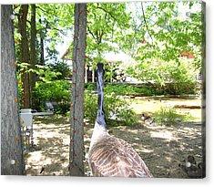 Duck - Animal - 011312 Acrylic Print by DC Photographer