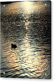 Duck At Sunset Acrylic Print