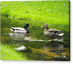 Duck Couple Acrylic Print
