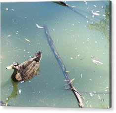 Duck In Pond Acrylic Print