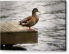 Duck Acrylic Print by Lutz Baar