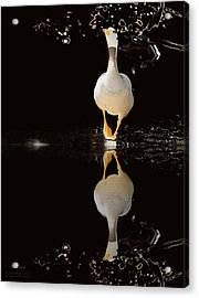 Duck On Stage Acrylic Print