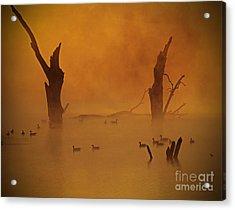Duck Pond Acrylic Print
