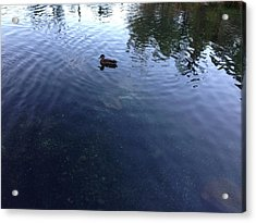 Duck Acrylic Print by Ron Torborg