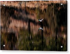 Duck Scape Acrylic Print