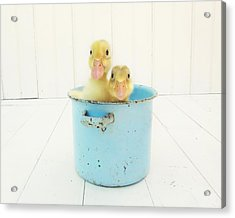 Duck Soup Acrylic Print by Amy Tyler