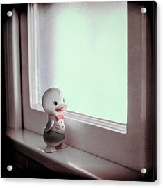 Duckie At The Window Acrylic Print by Yo Pedro