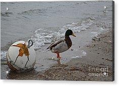Duckie Duckie Acrylic Print by Renie Rutten