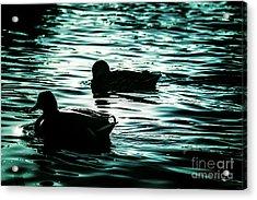 Duckies Acrylic Print by Arlene Sundby