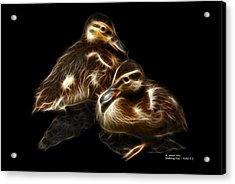 Duckling Duo - 9530 F C Acrylic Print