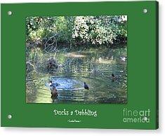 Ducks A Dabbling Acrylic Print