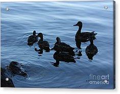Ducks At Dusk Acrylic Print