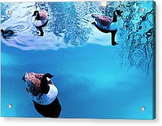 Acrylic Print featuring the photograph Ducks At Pond by Marwan Khoury