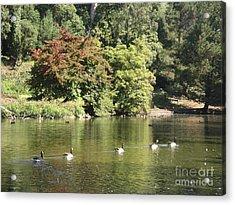 Geese In A Row Acrylic Print